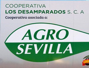 OUR COOPERATIVE JOINS AGRO SEVILLA ACEITUNAS SCA
