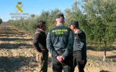 Reportaje sobre los robos de aceitunas